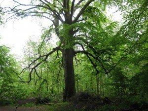 La forêt et le bucheron. dans Fable img_1328-300x225