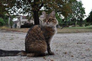 Georges Brassens( le chat). dans petits mots. dsc_0004aout-2010-300x199